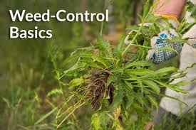 Weed control service and basic tips